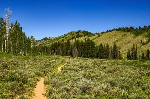 Bunchgrass to White Pine Lake