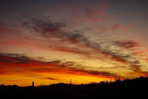 Organ Cactus sunset