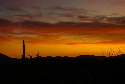 Organ Cactus sunset 2