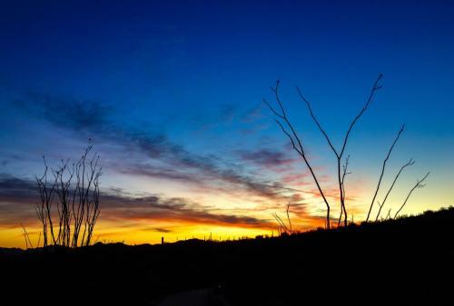 Organ Cactus sunset 3