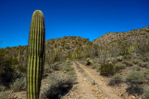 Milton Mine Trail 2