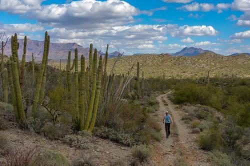 Milton Mine Trail 8