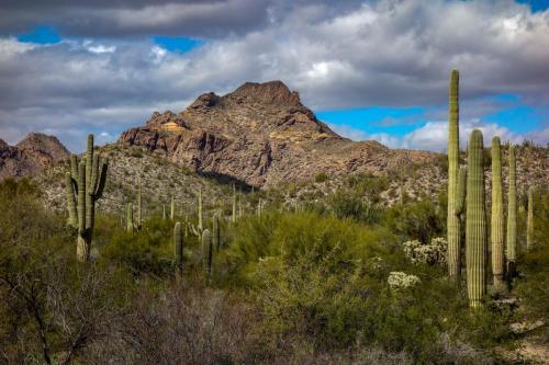 Milton Mine Trail 9