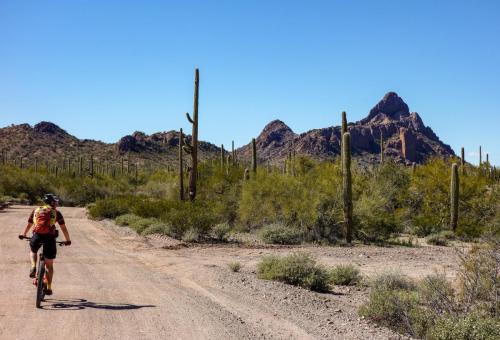 Ajo Desert Loop