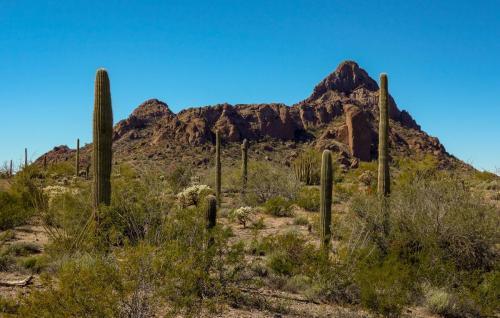 Ajo Desert Loop 3