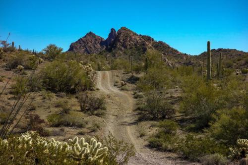 Ajo Desert Loop 6