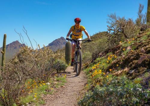 Brown Mountain loop, Tucson