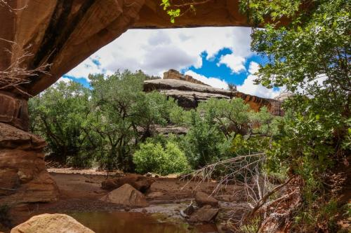Natural Bridges NM