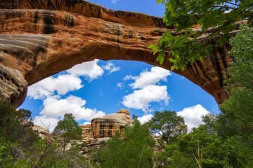 Natural Bridges NM