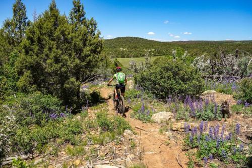 McPhee Trail