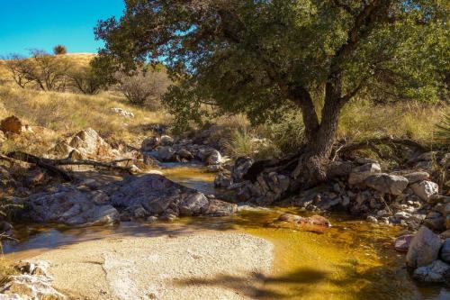 AZ Trail Bellota
