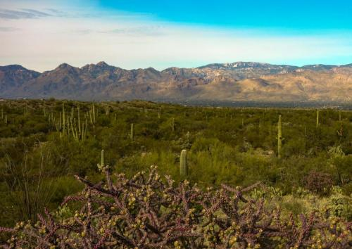 Saguaro Park East