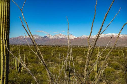 Saguaro NP east