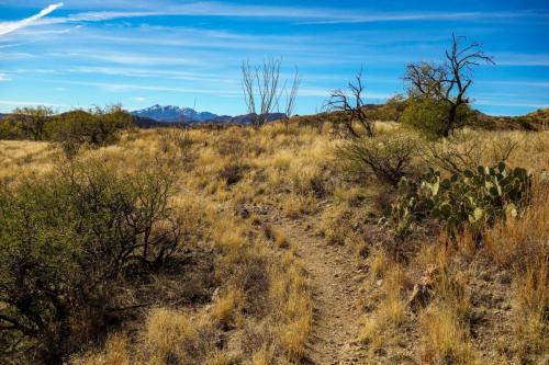 AZ trail Las Colinas
